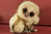 Gah!  So much cuteness