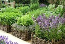 Gardens & Plants to Inspire