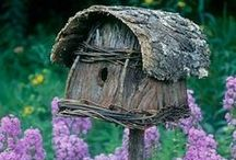 Birds & Bird houses  / I love watching birds at my feeder.  And now since Pinterest I love the feeders too!