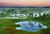 I ♥ Estonia / Sweet mysteries of my homeland / by Helena Sikk