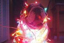 christmas / by alanna bean