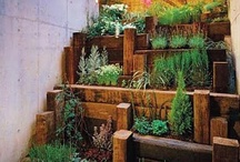 Garden / by Audrey Darnell