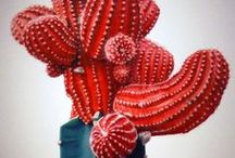 Scarlet Letter / Red Colored Inspiration