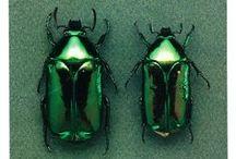 蟲逍遥  insects wonderland
