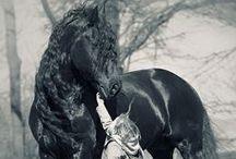 Los caballos que nos gustan en Ranch Depot / El Caballo para el hombre es como las alas para el ave.