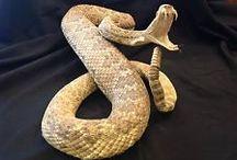 Reptile Taxidermy