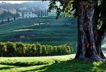 Discover the Bertani Tenuta Novare / Tenuta Novare, un terrori unico nel cuore della Valpolicella Classica