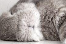 [] ♡ Bunnies  []
