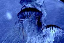 Blue / Calm in blue