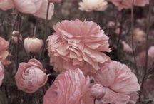 Florals / Floral fantasy to inspire!