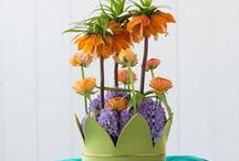 ☼ oranje seizoensbloemen / Seasonal joy of flowers #orange beauties  Inspired by Pinterest and www.pureseasonalflowers.nl