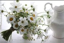 ☼ witte seizoensbloemen / Seasonal joy of flowers #white beauties   Inspired by Pinterest and www.pureseasonalflowers.nl