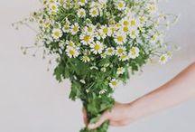 ☼ we <3 summer flowers / The joy of the summer season. With flowers.  Inspired by Pinterest and www.pureseasonalflowers.com  De blijdschap van het zomer seizoen, met bloemen.  Geinspireerd door Pinterest en www.pureseasonalflowers.nl
