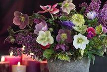 ☼ we <3 winter flowers / The joy of the winter season. With flowers. Inspired by Pinterest and www.pureseasonalflowers.com   De blijdschap van het winterseizoen, met bloemen.  Geinspireerd door Pinterest en www.pureseasonalflowers.nl