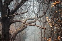 T R E E S / Interesting and artsy images of trees. / by Blue Diva Designs