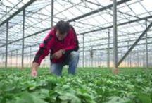 ☼ PurE seasonal flowers film / Kijk hoe seizoensbloeen worden gekweekt en verzorgd. We laten zie hoe je seizoensboeketten kunt maken.