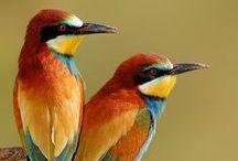 Dreambirds