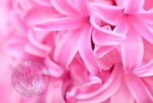 ☼ geurende lentebloemen / Een verzameling van geurende voorjaarsbloemen. Beschikbaar in de periode januari-april. Bron: www.pureseasonalflowers.nl