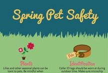 Infographics / Goodnewsforpets infographics for all your pet needs!