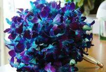 Wedding Flowers / by Michelle Jones