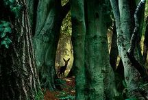 Imagine / Forests, gardens and other magical places...