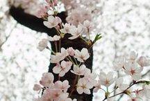 Spring…in love