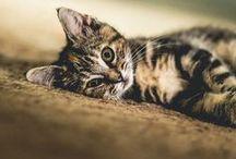 cute animals ❤ / allatokrol