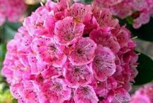 Flores / Diversos tipos fe flores