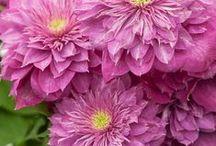 Цветы / Один мудрый человек сказал, что для счастья человеку нужно немного: солнце, небо и цветок. Говорят, что человек должен в своей жизни вырастить сына, построить дом, посадить дерево... Если каждый посадит и вырастит хотя бы один цветок - земля превратится в прекрасный сад…