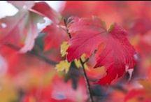 4 seasons... Autumn