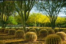 Palm Springs Gardens