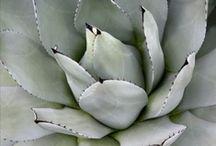 Desert Garden Inspiration (silver/white/purple)