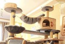 Cool Cat Furniture Cat Trees Cat Towers Cat Condo Plans Eye