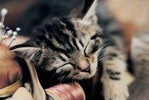 Kitties / słodkie i nie tylko  - kociaki