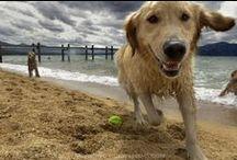 Pet Friendly Tahoe Properties