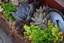 Gardening: Green Thumb / Everything you need to make that dream garden become a reality.