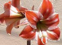 Flores - Plantas - Jardín / Cuidados y beneficios de flores y plantas