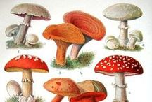 Ylt sienet