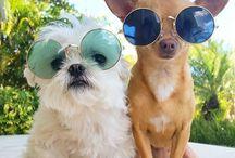 IREL Vet / IREL Vet - kosmetika pro psy, ta nejjemnější péče o Vaše mazlíčky