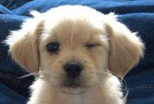 Puppy / Pets