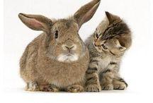 Animals / So cute pets