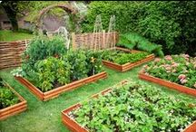Garden Boxes / Raised garden beds are higher than ground leveled and filled with soil in an enclosed frame. This board gives you ideas & tips on how to improve your garden's appearance and accessibility.