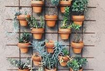 Vertical Gardening / Short on space for a garden? No problem! Use one of the ideas provided on this board to make your gardening dream a reality!