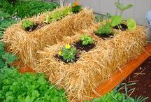 Straw Bale Gardening / Easy | Inexpensive | No Soil Required