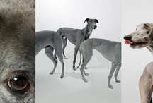 Greyhound stuff (wow) / by Bethany Harris