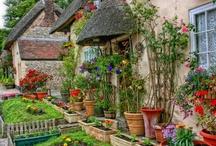 Garten liebe / by Tante Lory