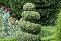TOPIARY / Man's ultimate control over nature.  Fascinating in its artificiality.