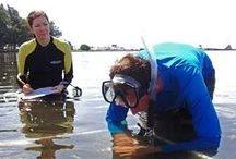 Seagrass Transect Training 2014 / TBEP annually conducts a hands-on training session for Tampa Bay seagrass scientists. Scientists from nine different agencies and organizations participated in the 2014 session. They practiced techniques for measuring seagrass abundance, density and health, using a standardized method to ensure consistency and accuracy. This fall, they will put their skills to work collecting seagrass data from about 60 different locations in Tampa Bay.