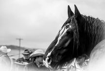 Horses / by Pamela Johnson