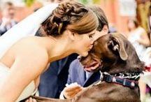 Pets - Casamento - Wedding / Mais no www.madrinhasdealuguel.com.br e www.facebook.com/Madrinhas.  Entre em contato no madrinhas@madrinhasdealuguel.com.br.